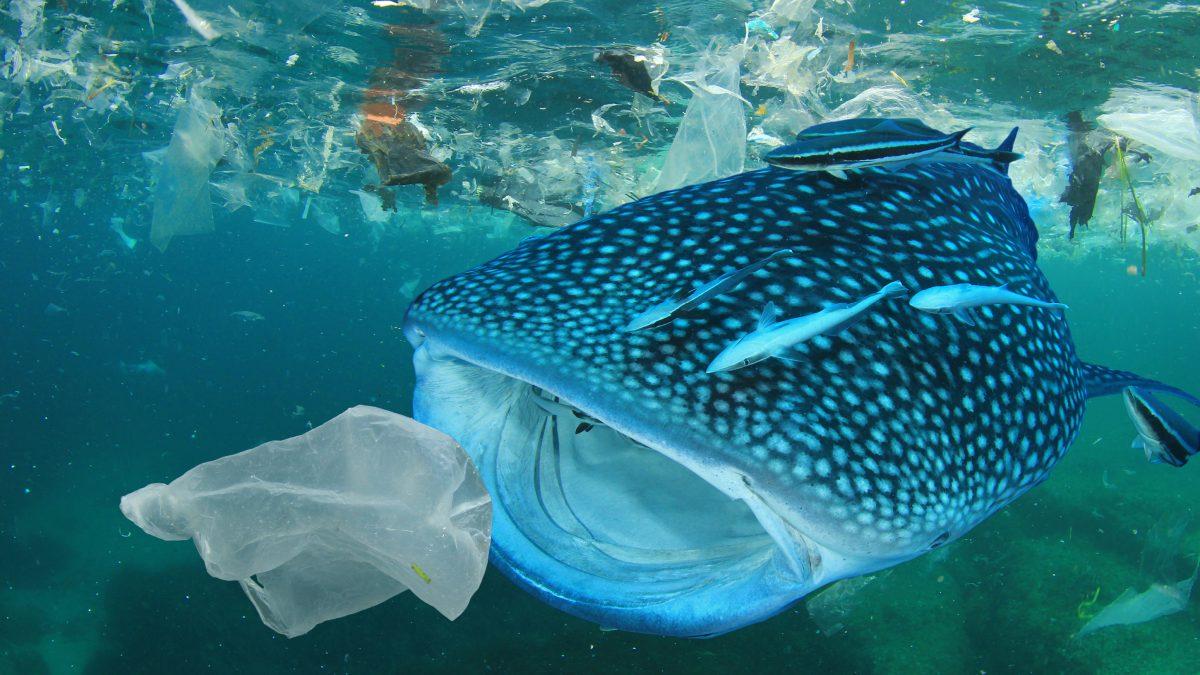 determinazione delle microplastiche nei tessuti dei pesci